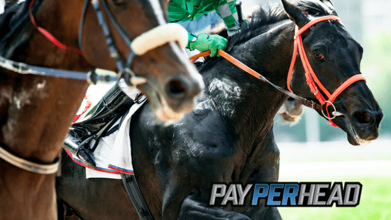 Triple Crown Betting For Online Bookies: Preakness Stakes Odds