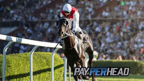 Pay Per Head Tips: Turn Your Racebook Into Straight Profit