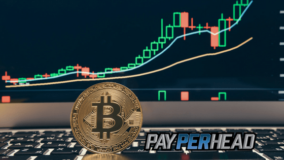 Price Per Head Agents Should Understand Bitcoin Price Charts