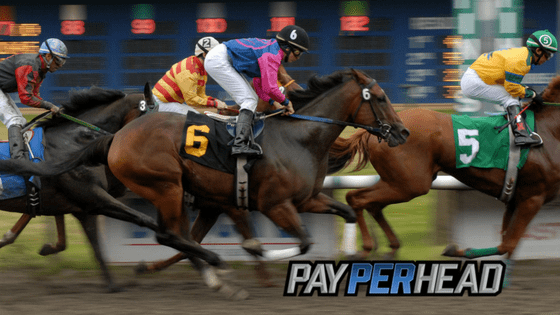 Horse Betting 101: Brush Up on Popular Horse Bets in Your Book